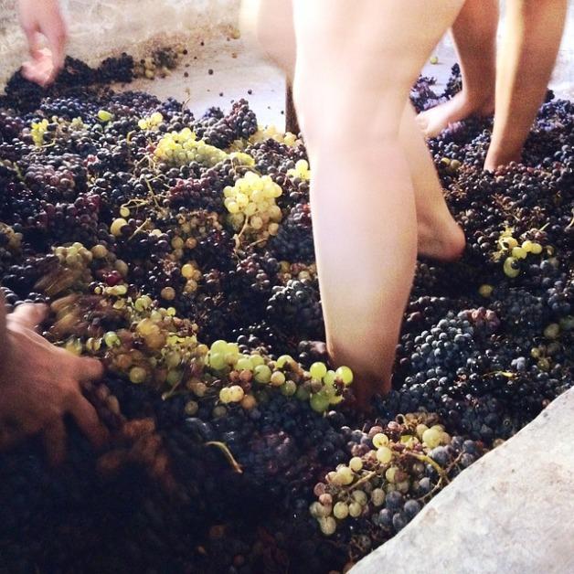 grapes-1799983_640
