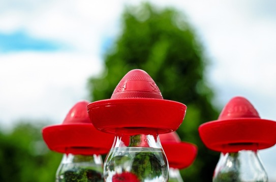 sombrero-1435948_1280